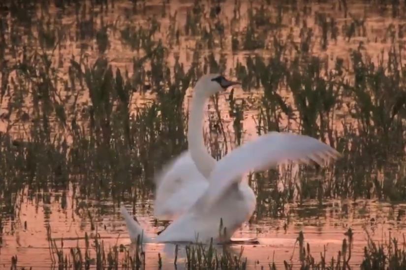 U Kopačkom ritu obilježen Svjetski dan voda