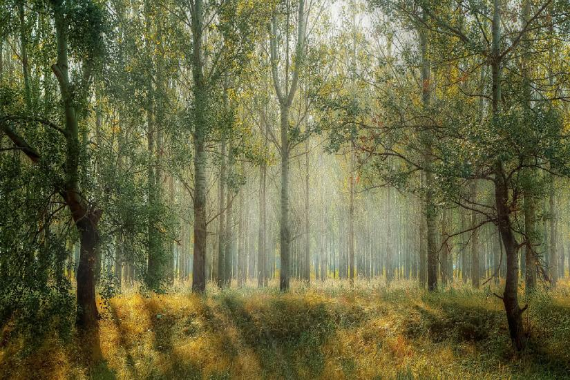 Danas je Svjetski dan šuma!