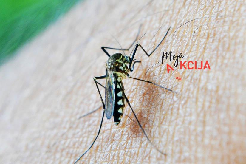 Ufff, zaista su dosadni! Jesu li vas već počeli 'gnjaviti' komarci? Naravno!