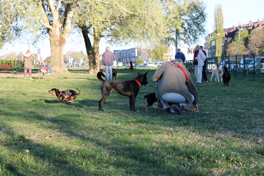FOTO: Služi li svrsi 'pseći park' na Promenadi? Itekako!