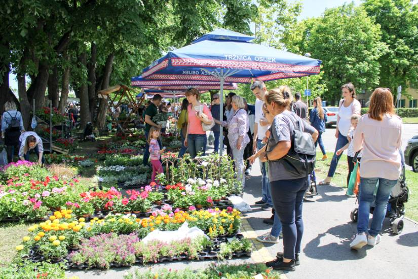 Foto: Festival cvijeća Osijek